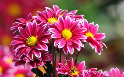 Beautiful-flower-04